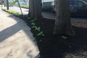 Photo #12: MATIAS LANDSCAPING INC.