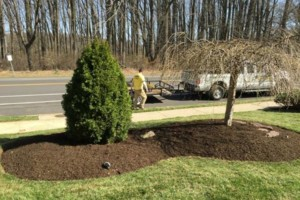 Photo #1: 1st Rate Lawngevity Lawn Services - Aeration specials