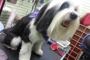 Photo #1: Dog Grooming & Dog Training