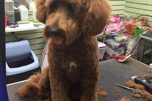 Photo #3: Dog Grooming & Dog Training