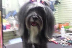 Photo #4: Dog Grooming & Dog Training