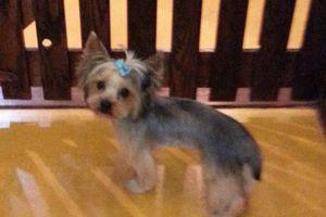 Photo #6: Dog Grooming & Dog Training