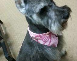 Photo #7: Dog Grooming & Dog Training