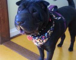 Photo #8: Dog Grooming & Dog Training
