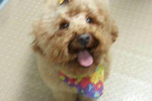 Photo #10: Dog Grooming & Dog Training