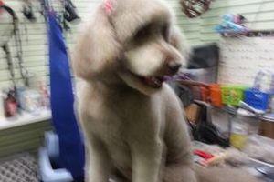 Photo #11: Dog Grooming & Dog Training