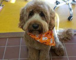 Photo #12: Dog Grooming & Dog Training