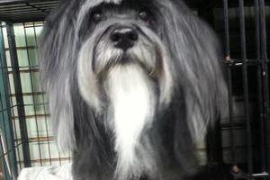 Photo #13: Dog Grooming & Dog Training