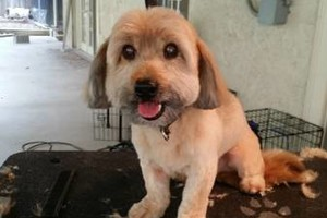 Photo #3: Pet grooming starting at $35!