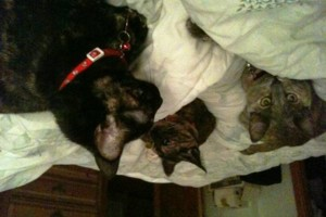 Photo #10: Precious Pet Sitters & Dog Walkers