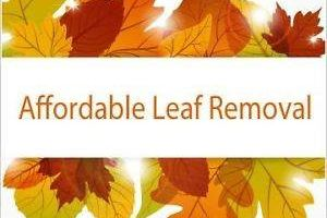 Photo #1: LEAF REMOVAL SERVICE