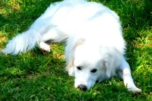 Photo #5: Pet sitter 25$ overnight /15$ daycate