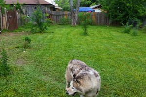 Photo #4: Pet sitter 25$ overnight /15$ daycate