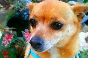 Photo #3: Pet sitter 25$ overnight /15$ daycate