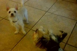 Photo #2: Pet sitter 25$ overnight /15$ daycate