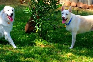 Photo #1: Pet sitter 25$ overnight /15$ daycate