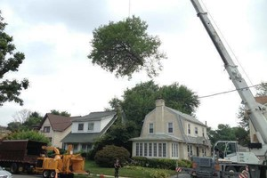 Photo #5: A CUT ABOVE TREE SERVICE OF PA, INC,