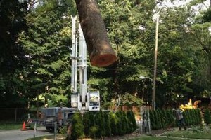 Photo #3: A CUT ABOVE TREE SERVICE OF PA, INC,