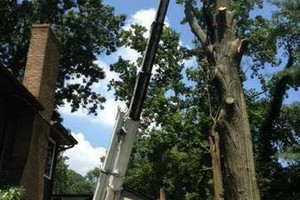 Photo #2: A CUT ABOVE TREE SERVICE OF PA, INC,