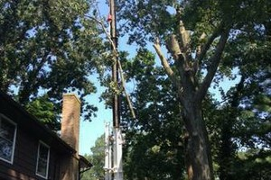 Photo #1: A CUT ABOVE TREE SERVICE OF PA, INC,