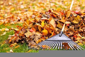 Photo #1: Fall Leaf Cleanups