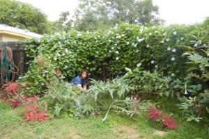 Photo #4: Artemantis Landscape most yards cut for $30