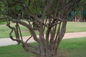 Photo #1: Artemantis Landscape most yards cut for $30