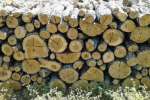 Photo #1: FIREWOOD SERVICE AVAILABLE - POST OAK FIREWOOD