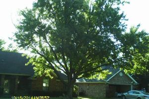 Photo #7: BUDGET FRIENDLY TREE SERVICE!!!!!