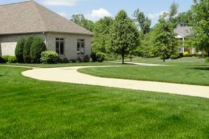 Photo #1: Everything about lawn and tree services - starting $20