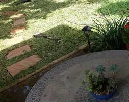 Photo #2: Leafed clearing & Lawnservice