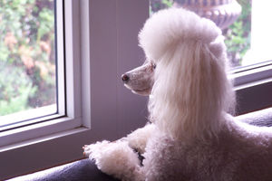 Photo #1: Dog walker/pet sitter