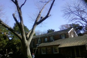 Photo #4: Artisan Tree Service - Trimming Removals and More