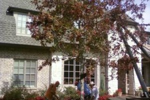 Photo #3: Artisan Tree Service - Trimming Removals and More