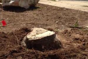 Photo #14: Caleb Tree Removal