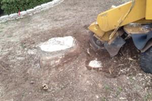 Photo #13: Caleb Tree Removal