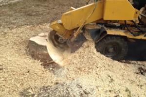 Photo #12: Caleb Tree Removal
