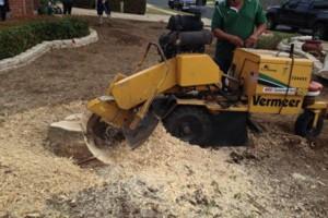 Photo #11: Caleb Tree Removal
