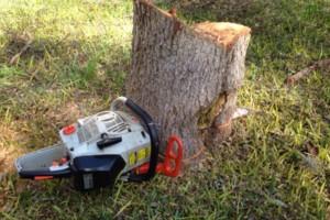 Photo #10: Caleb Tree Removal