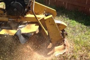 Photo #9: Caleb Tree Removal
