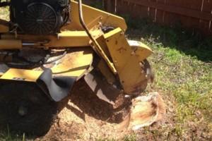 Photo #8: Caleb Tree Removal
