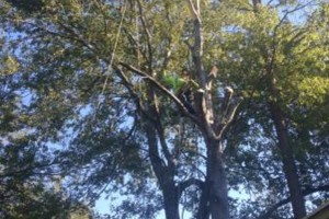 Photo #7: Caleb Tree Removal