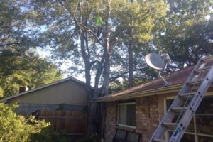 Photo #6: Caleb Tree Removal