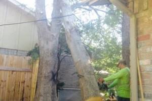 Photo #5: Caleb Tree Removal