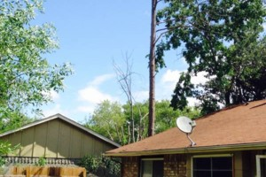 Photo #4: Caleb Tree Removal