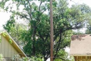 Photo #3: Caleb Tree Removal