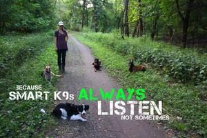 Photo #6: SmartK9 Professional Dog Training
