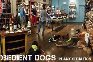 Photo #5: SmartK9 Professional Dog Training