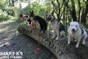 Photo #3: SmartK9 Professional Dog Training