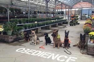 Photo #2: SmartK9 Professional Dog Training